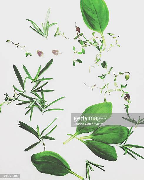 Close-Up Of Herbs Against White Background