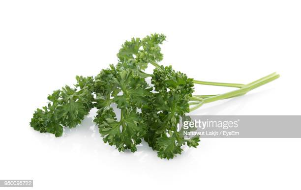 close-up of herbs against white background - parsley stock pictures, royalty-free photos & images