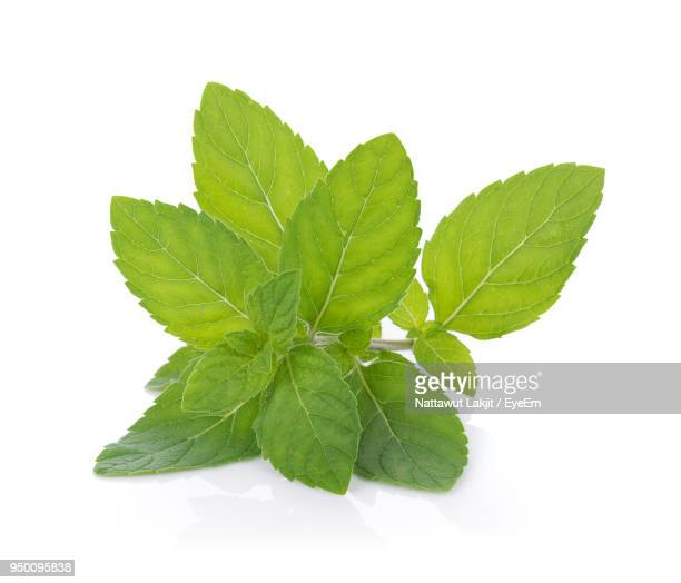close-up of herbs against white background - mint leaf stock photos and pictures