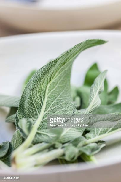 Close-Up Of Herbs In Plate On Table