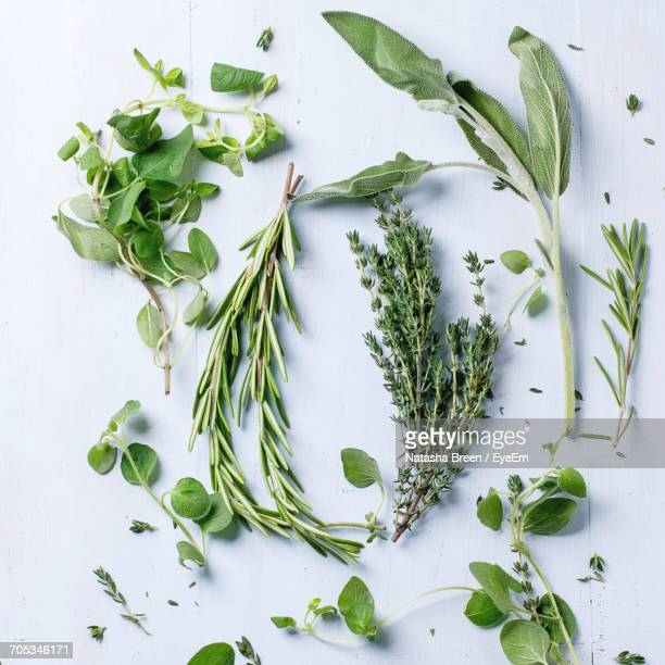 close-up of herbs - herb stock pictures, royalty-free photos & images