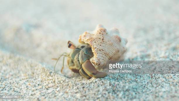 Close-Up Of Hermit Crab on a Sandy Beach