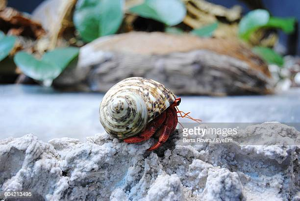 close-up of hermit crab on rock - hermit crab stock pictures, royalty-free photos & images