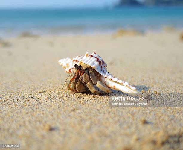 close-up of hermit crab on sand at beach - hermit crab stock pictures, royalty-free photos & images