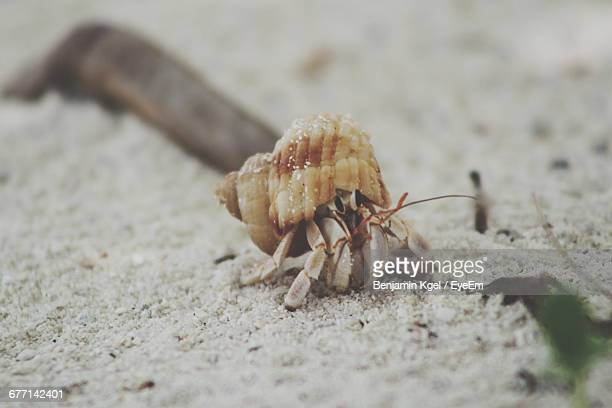 Close-Up Of Hermit Crab On Sand At Beach