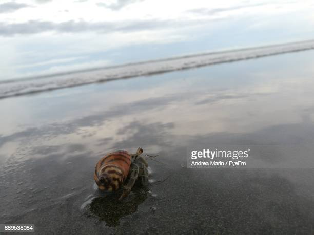 close-up of hermit crab on shore at beach - hermit crab stock pictures, royalty-free photos & images