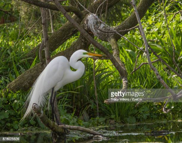 Close-Up Of Heron Perching On Tree