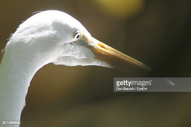 close-up of heron - barulho stock pictures, royalty-free photos & images