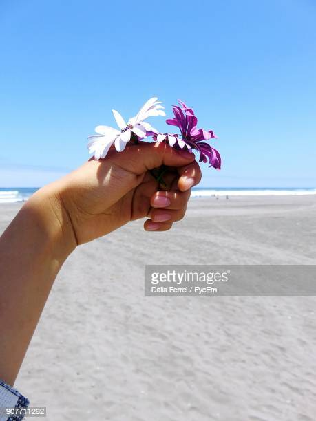 Close-Up Of Holding Flower On Beach Against Blue Sky