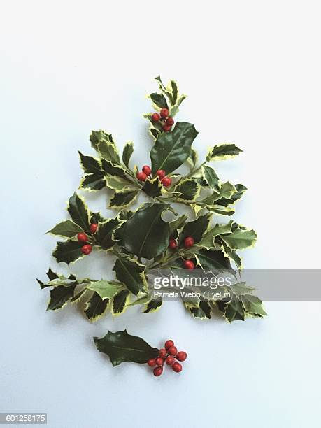 Close-Up Of Holly Plant Against White Background
