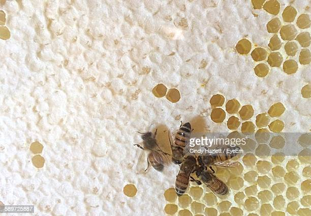 Close-Up Of Honey Bee On Comb