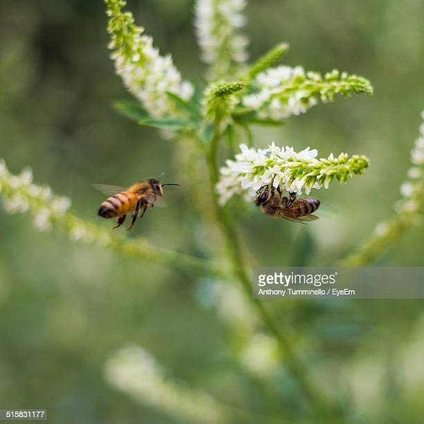 Close-up Of Honey Bees And Flowers In Park