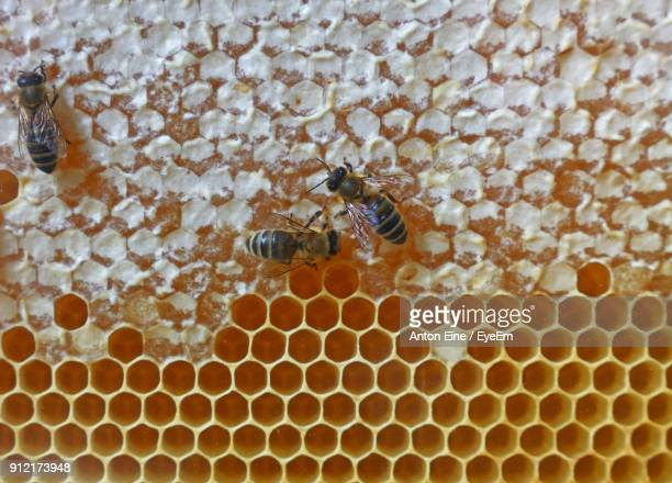 Close-Up Of Honey Bees On Comb