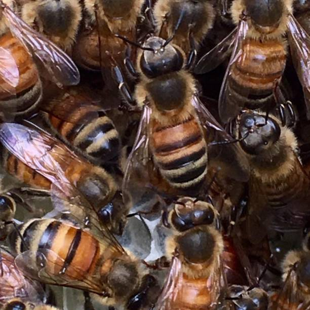 Close-up of honey bees on honeycomb
