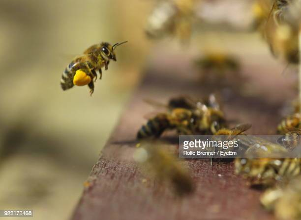 close-up of honey bees on wood - biene stock-fotos und bilder