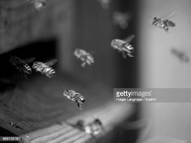 close-up of honeybees flying near beehive - colony stock pictures, royalty-free photos & images