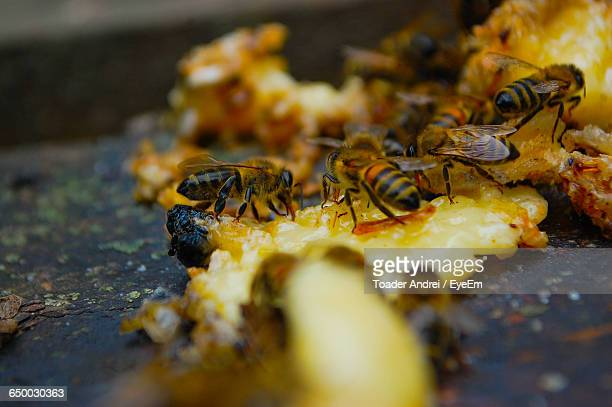 Close-Up Of Honeybees On Beehive