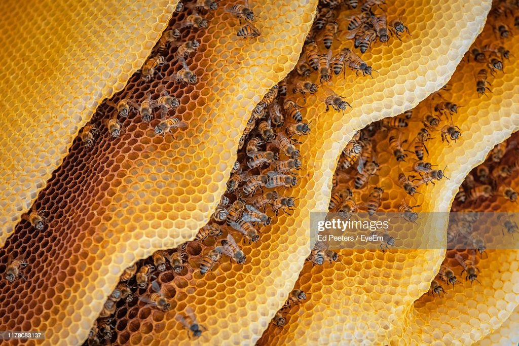 Close-Up Of Honeybees On Hive : Stock Photo