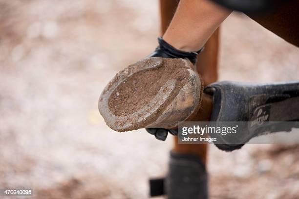 Close-up of hoof with horseshoe