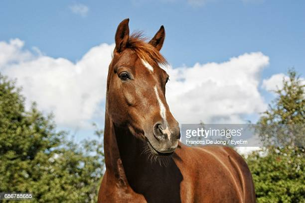 close-up of horse against blue sky - horse stock pictures, royalty-free photos & images