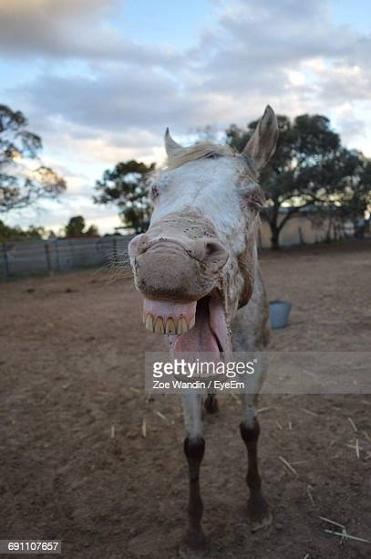 close-up of horse against sky - appaloosa stock pictures, royalty-free photos & images