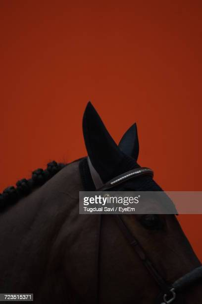 close-up of horse against sky - cheval photos et images de collection
