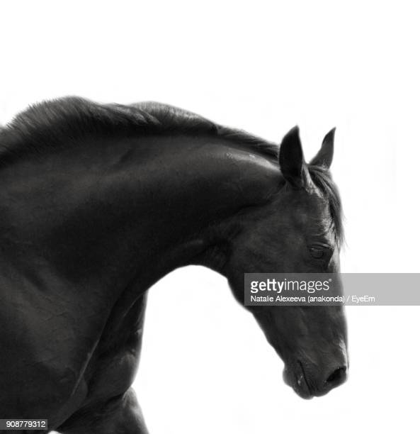 close-up of horse against white background - horse head ストックフォトと画像