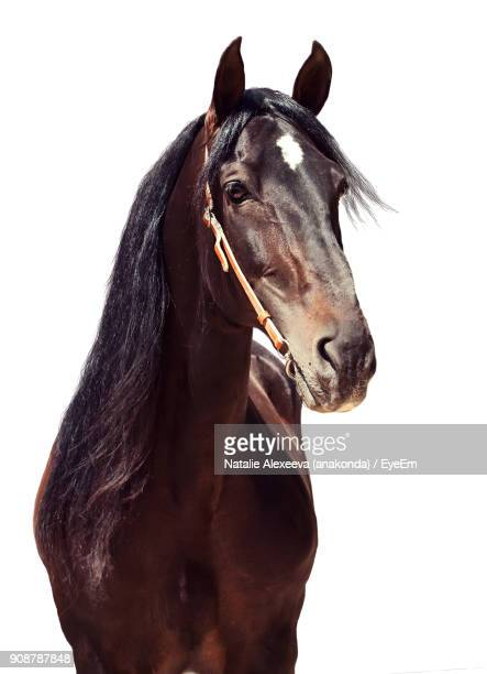 close-up of horse against white background - cheval photos et images de collection