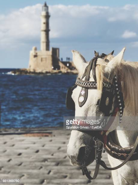 Close-Up Of Horse By Sea Against Sky