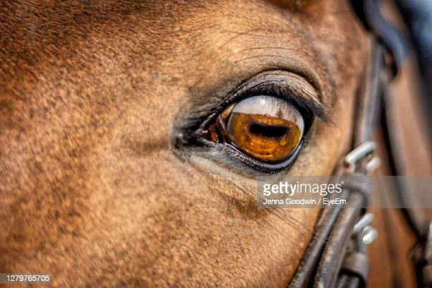 close-up of horse eye - eye stock pictures, royalty-free photos & images