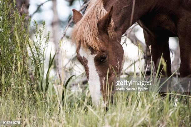 Close-Up Of Horse Grazing On Grassy Field