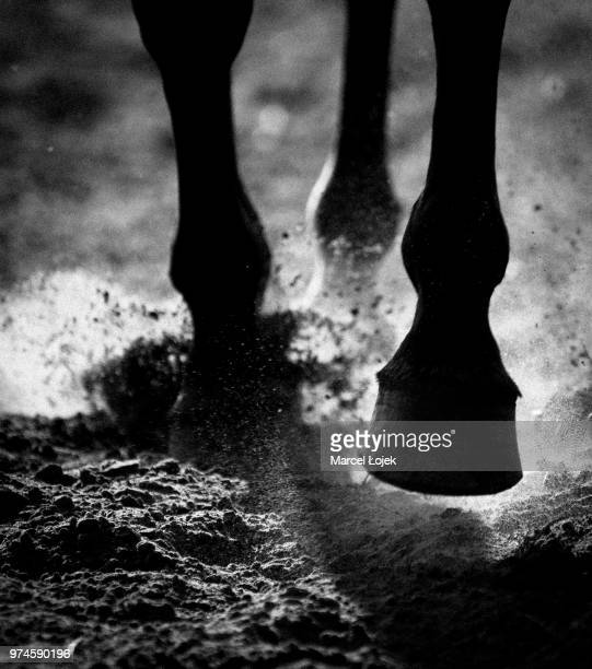 close-up of horse hooves galloping - horses running stock pictures, royalty-free photos & images