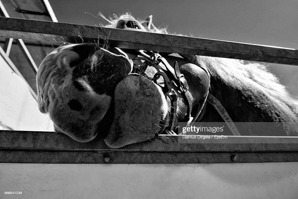 Close-Up Of Horse In Stable : Stock Photo