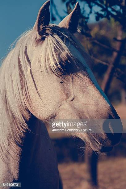 close-up of horse on field at dusk - albrecht schlotter stock photos and pictures