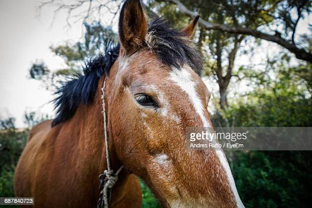 close-up of horse on field - andres ruffo stock pictures, royalty-free photos & images