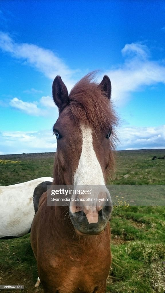 Close-Up Of Horse On Grassy Field Against Sky : Stock Photo
