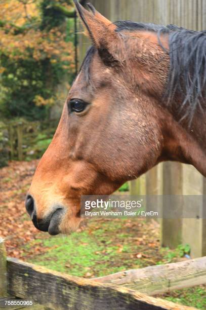 Close-Up Of Horse Outdoors