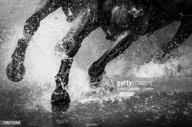 close-up of horse running in water - horses running stock pictures, royalty-free photos & images