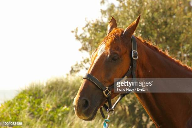 Close-Up Of Horse Standing Against Clear Sky