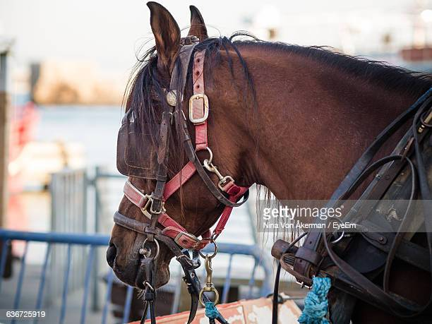 Close-Up Of Horse Standing By Railing
