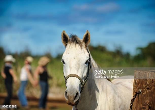 close-up of horse standing on field - haleiwa stock photos and pictures