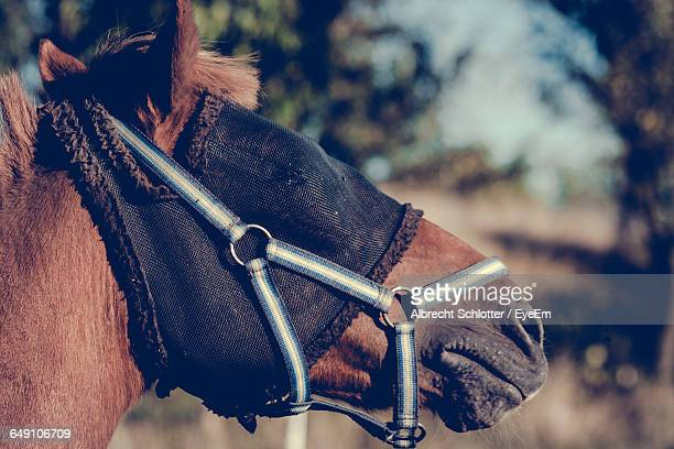 close-up of horse wearing mask - albrecht schlotter stock pictures, royalty-free photos & images