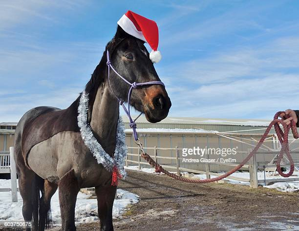 close-up of horse wearing santa hat standing on field against sky - christmas horse stock pictures, royalty-free photos & images