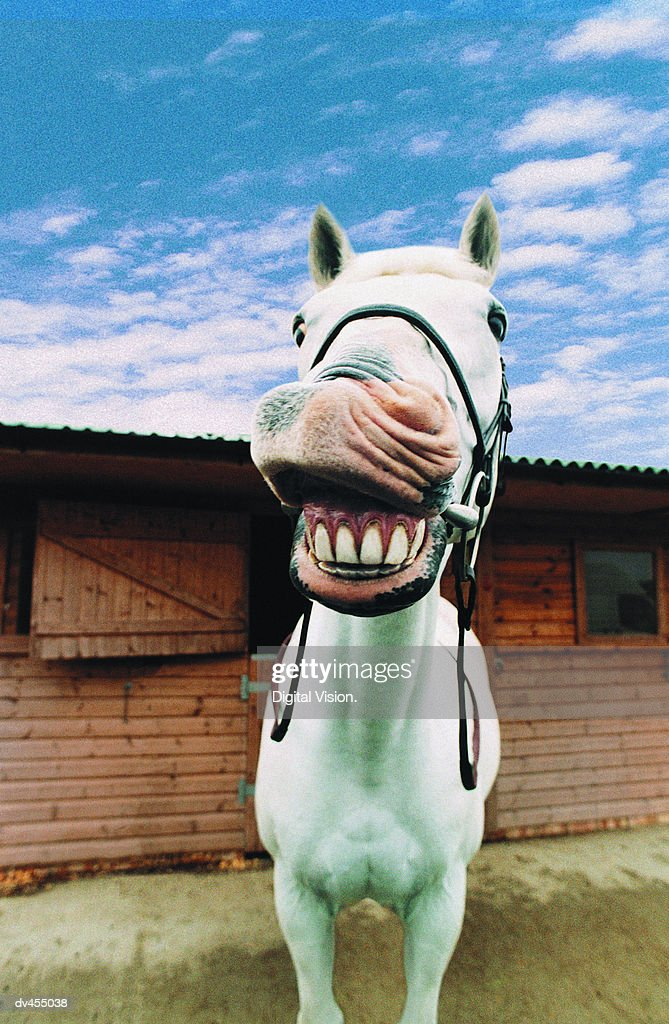 Close-up of Horse with Mouth Open : ストックフォト