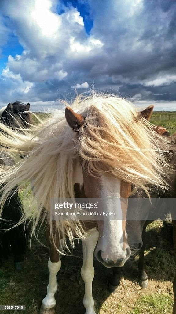 Close-Up Of Horses On Grassy Field Against Sky : Stock Photo