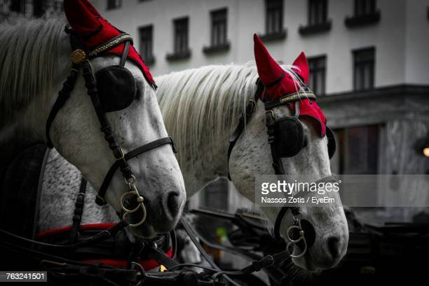 Close-Up Of Horses With Blinders