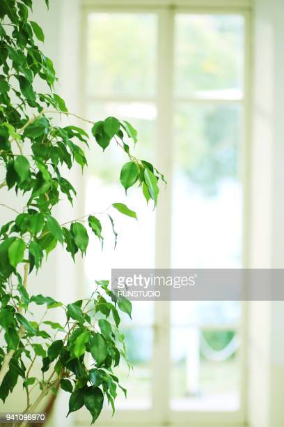 close-up of house plant against blurred background - 窓 ストックフォトと画像