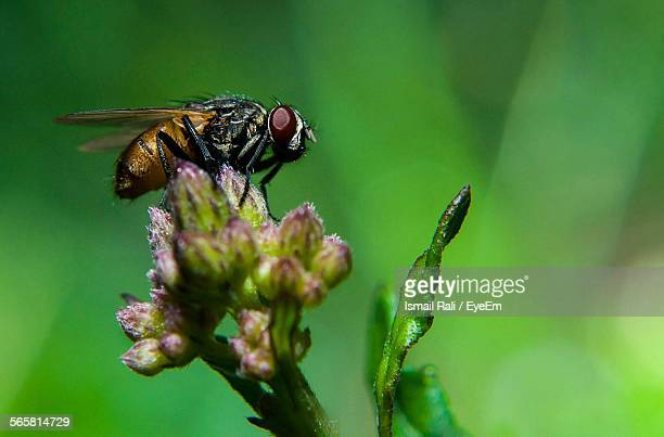 close-up of housefly on flower - housefly stock pictures, royalty-free photos & images