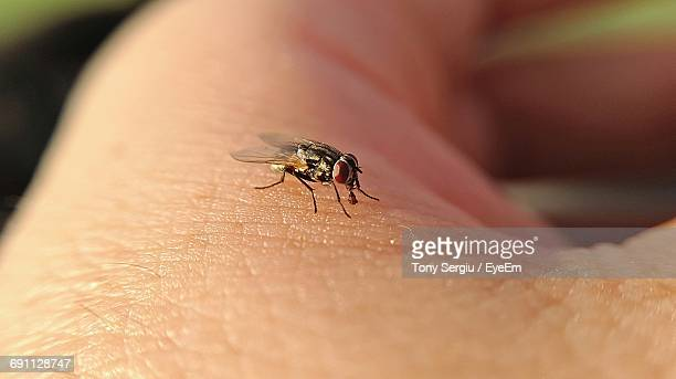 Close-Up Of Housefly On Person Skin