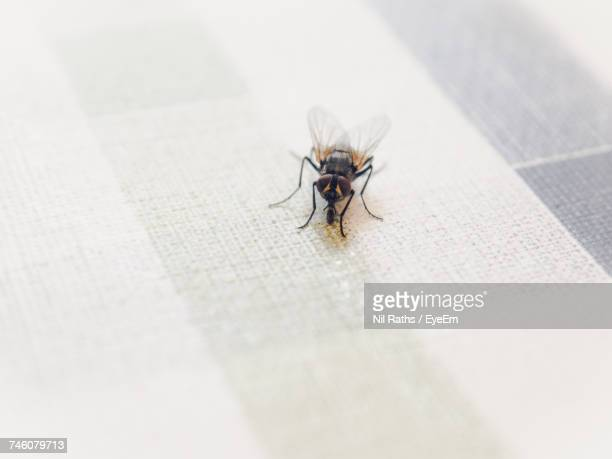 Close-Up Of Housefly On Tablecloth